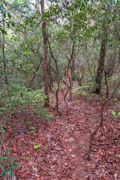 Interim Access Trail -- 2,650'
