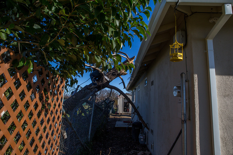 5671 Wallace Ave - Tree 1030am 12 16 2017 Extremly Windy Conditions-98.jpg