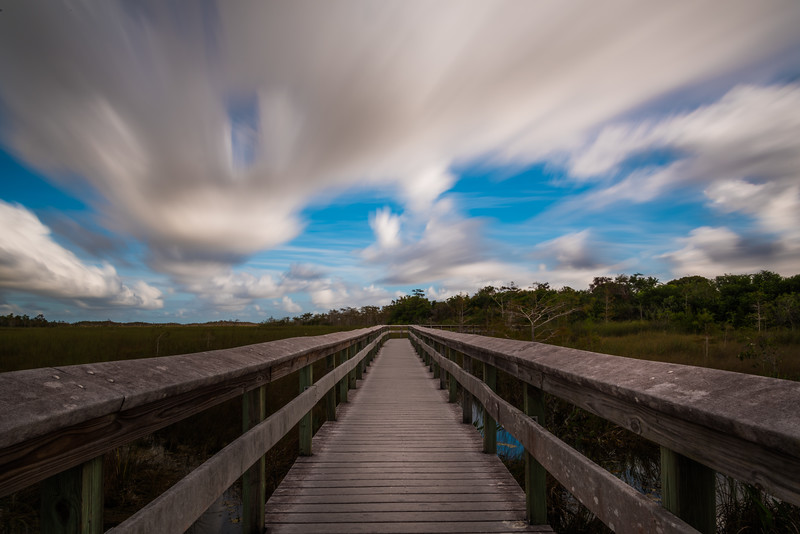 Everglades (19 of 37).jpg