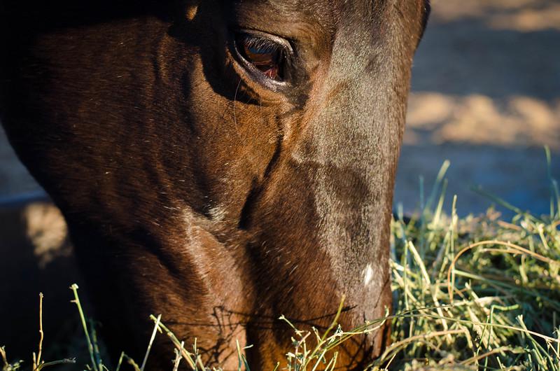 San Diego Horse Feeding