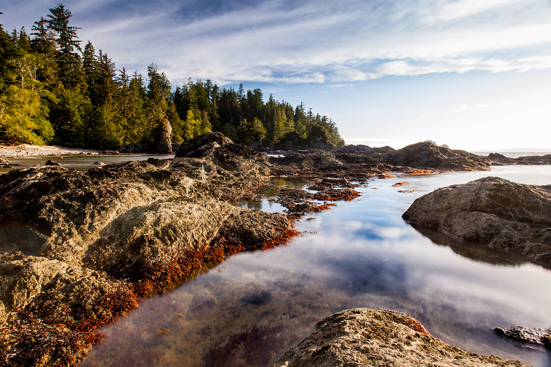 Vancouver Island intertidal zone