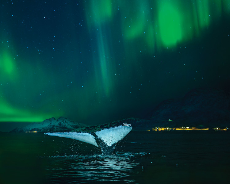 Green lights shine overhead, illuminating a whale's tale as it slides into the ocean.