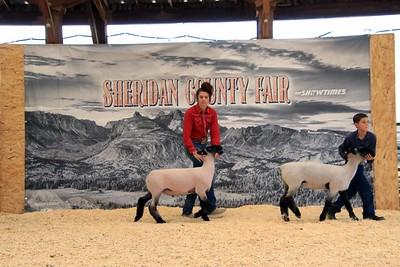 Sheridan County Bred & Fed Market Sheep