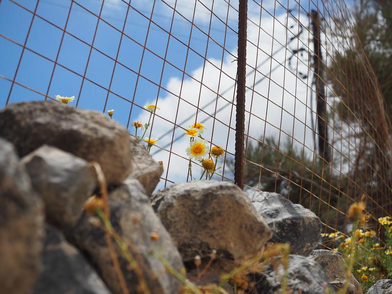 Santorini-17025.jpg