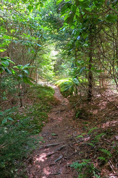 Green Mountain Trail -- 5,840'