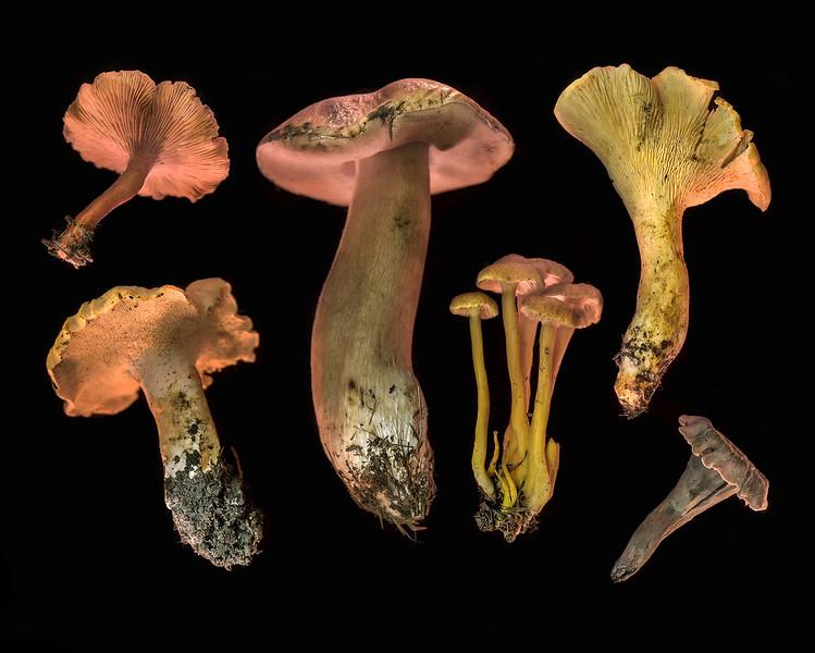 Wild Mushroom Medley #9