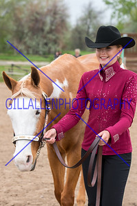 Colorado Stock Horse May 15th 2016