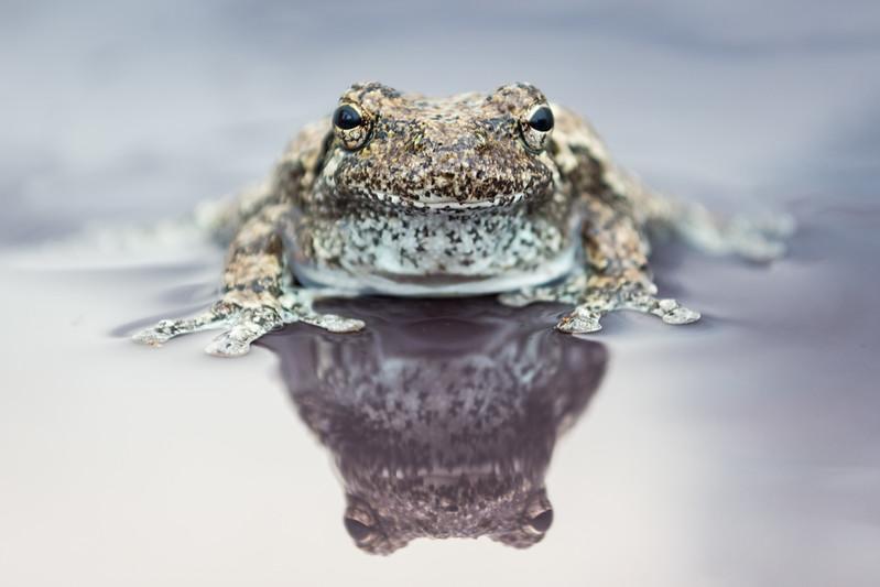 tree frog (2 of 3).jpg