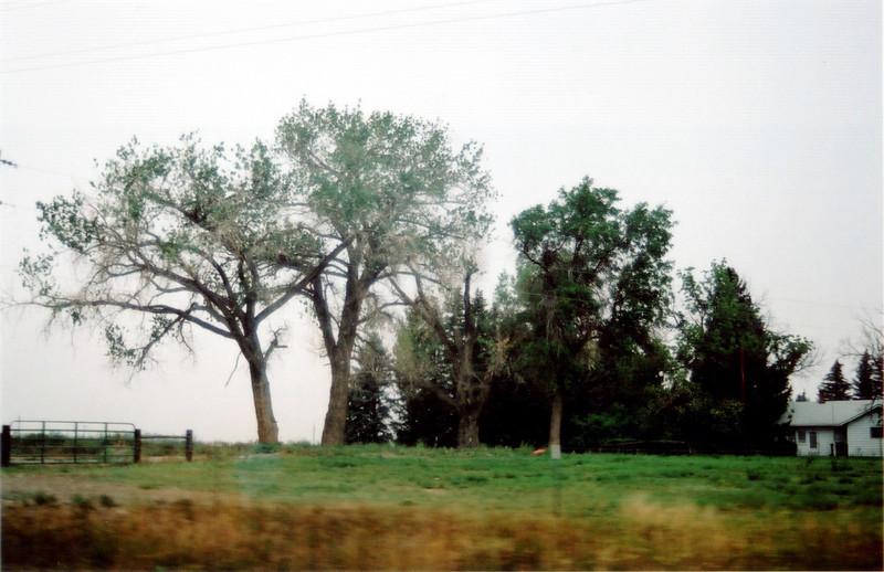 16 Tree.jpg