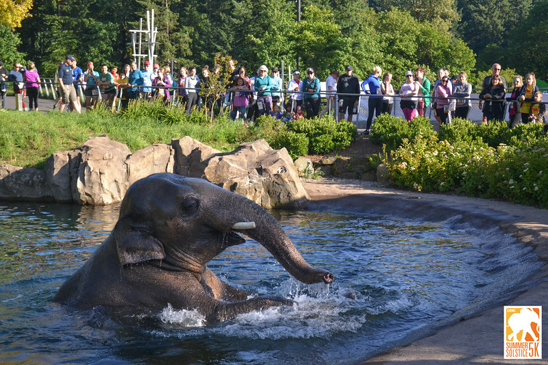 Anzelina-Coodey_Solstice-Run-Oregon-Zoo_013.jpg