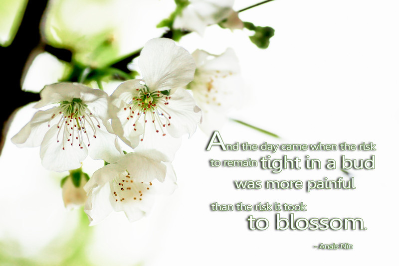 AN- RiskTo Blossom.jpg