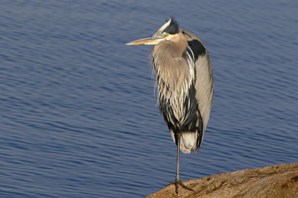 2020-12-02 Riverlands Migratory Bird Sanctuary
