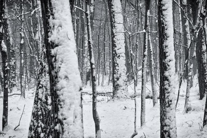 DA054,DB,wet snow.jpg