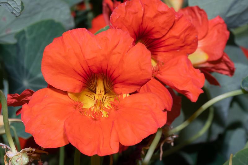 orange6-9763.jpg