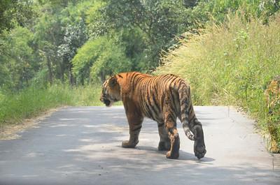Bannerghatta National Park - Part 2