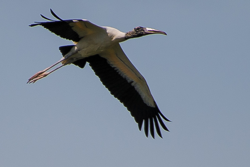 19-Sept North America Birds-0595.JPG