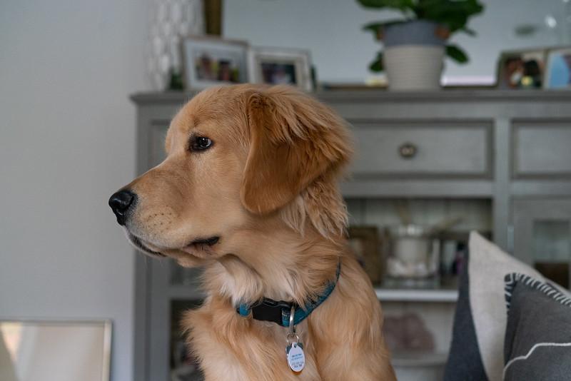 Branson-Dog-15.jpg