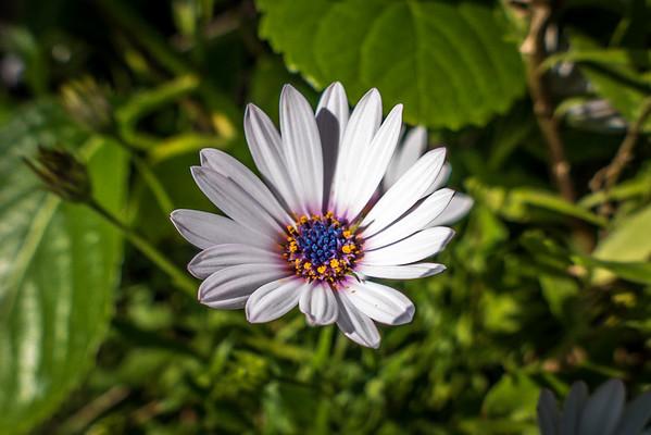 Italy Flowers