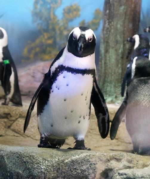 Penguin Stare.JPG