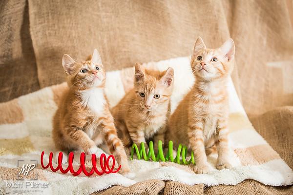 LAW Kittens - Sept 2015
