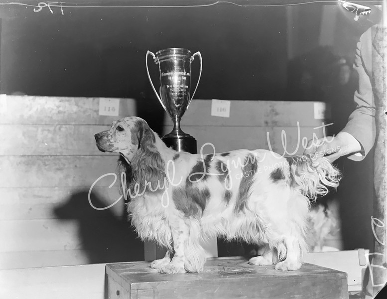 Cocker Spaniel 1932 - 1-WM.jpg