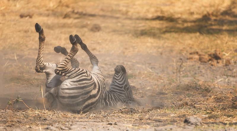 2014-08Aug-Okavango Masters-49-Edit.jpg