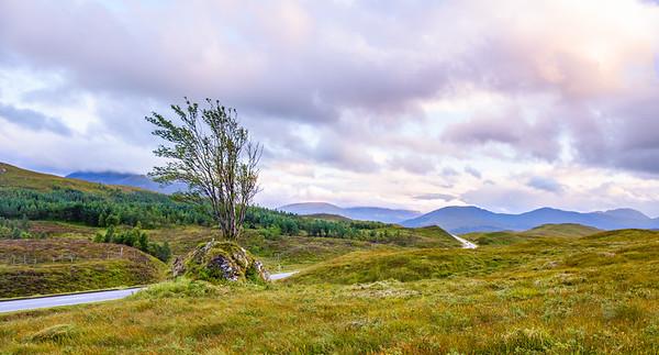 Lone Tree, Highlands - 15/08/2017