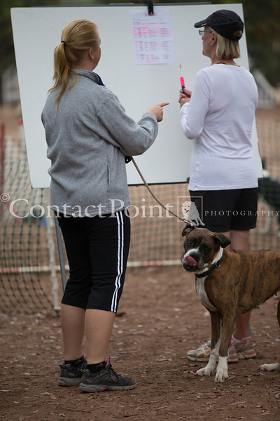 Contact Point AKC Agility - June 16, 2013