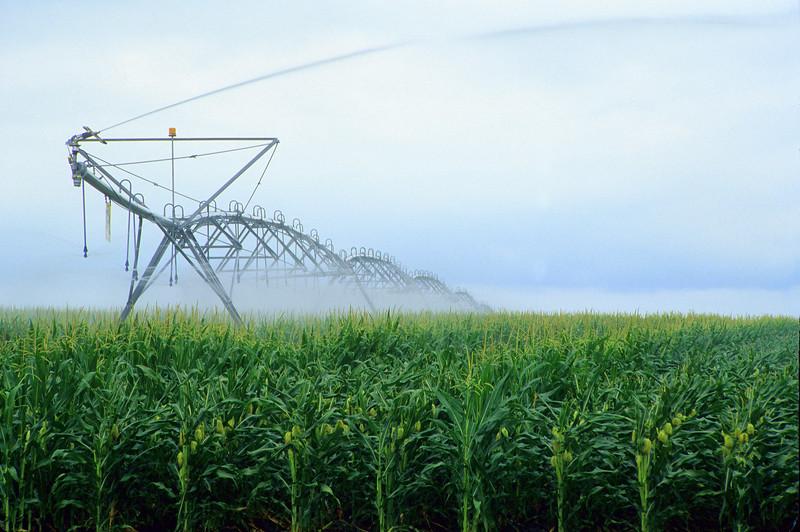 Pivot Irrigating Cornfield