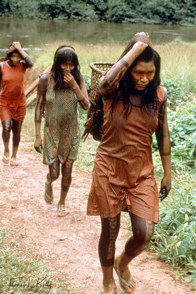 Kayapo women bringing Brazil nuts from the forest which is used to make medicinal oil.Kayapo, Brazilian Amazon.