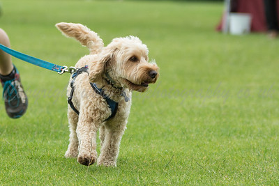 Wag N Woof Competition July 2016