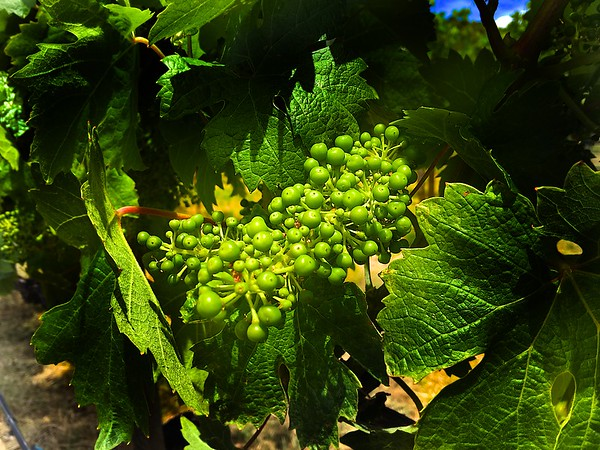 Troon Vineyard, Applegate Valley