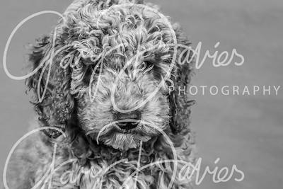 Pet Portrait Sample Gallery
