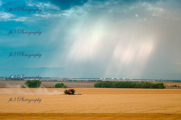 On my way home from work I saw they were cutting the wheat. got the added bonus of incoming rain.