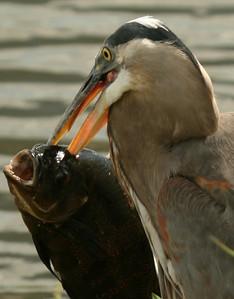 Everglades National Park Flora & Fauna