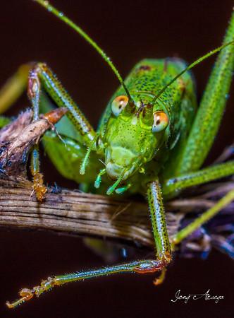 2019 Macro: Grasshopper