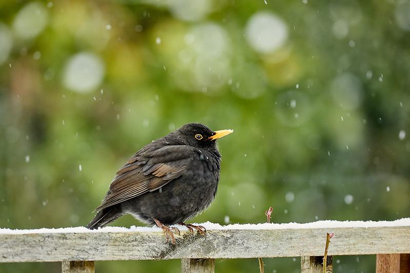 Day 60 - Garden Birds-4405.jpg