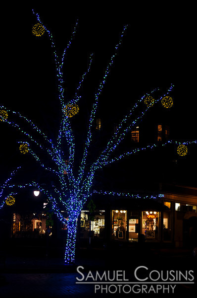 Pandora's lights covering a tree in Longfellow Square.