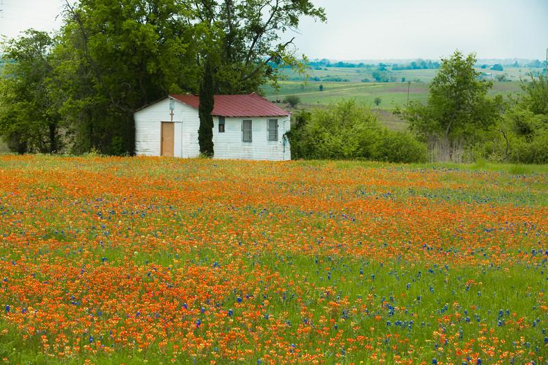 2015_4_3 Texas Wildflowers-7664.jpg