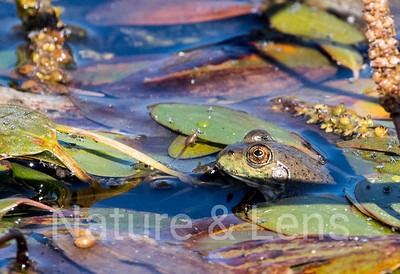 Frogs & Turtles