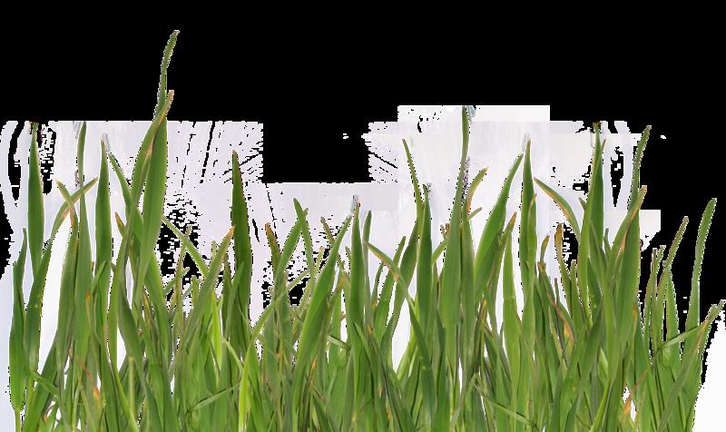 grass8.png