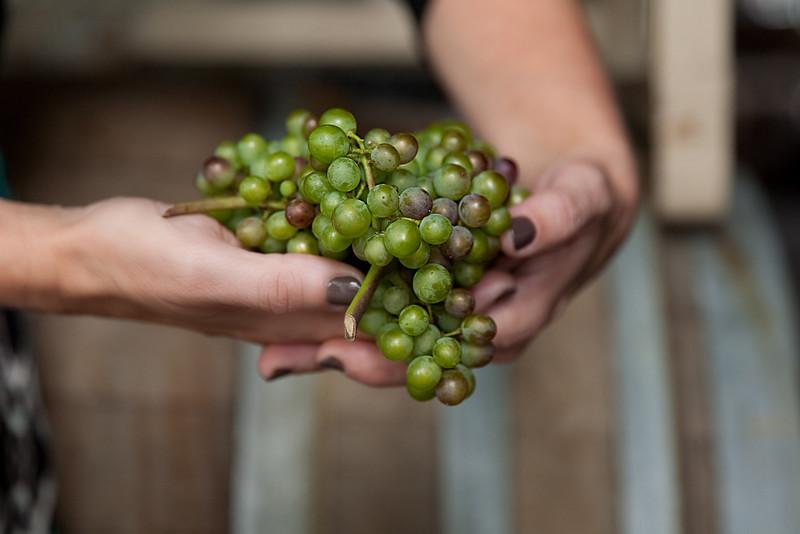 Boedecker Harvest
