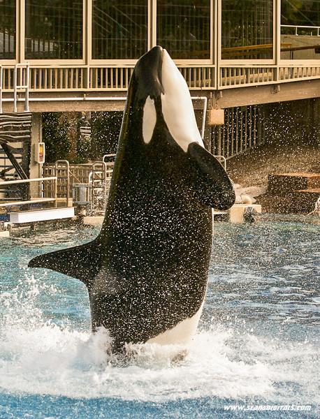 Seaworld-Zoo-16.jpg
