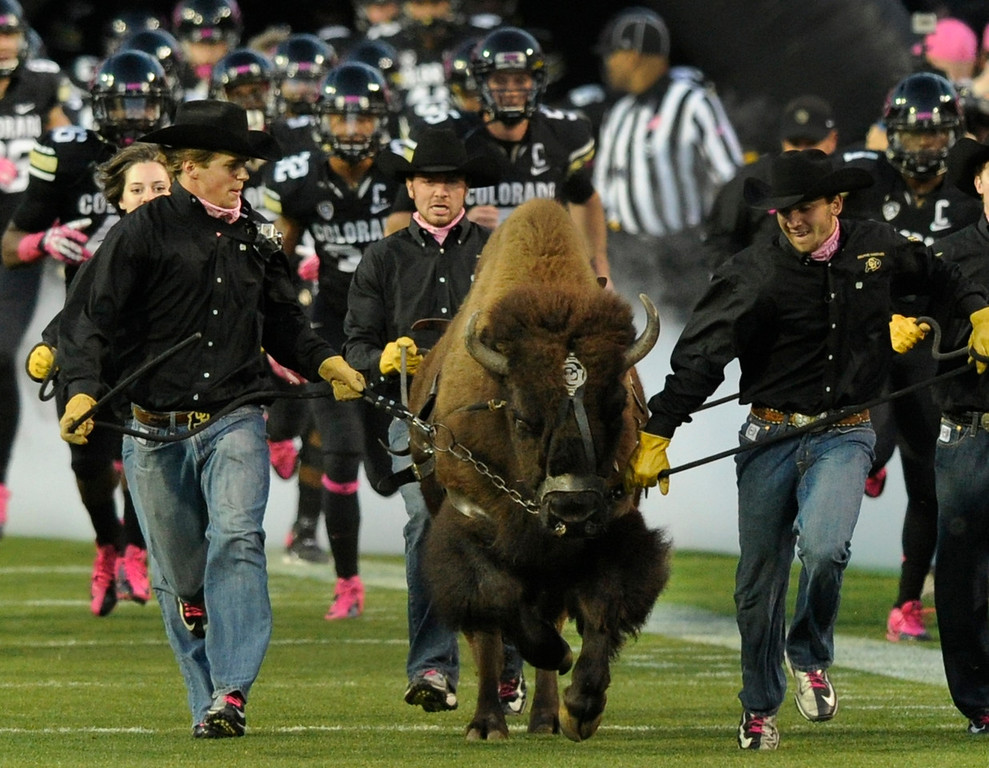 . BOULDER, CO. - OCTOBER 26: Ralphie the Buffalo led the team onto the field prior to the game.  The University of Colorado football team hosted Arizona Saturday night, October 26, 2013. Photo By Karl Gehring/The Denver Post