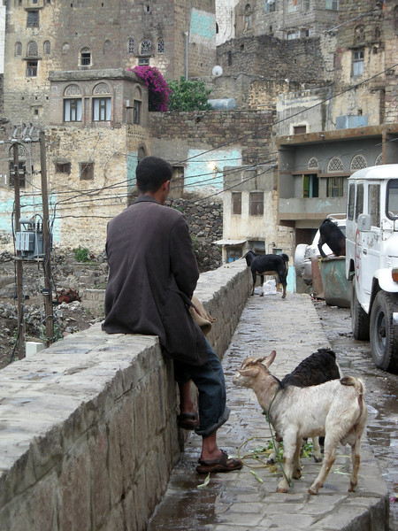 minding the goats in Jibbla