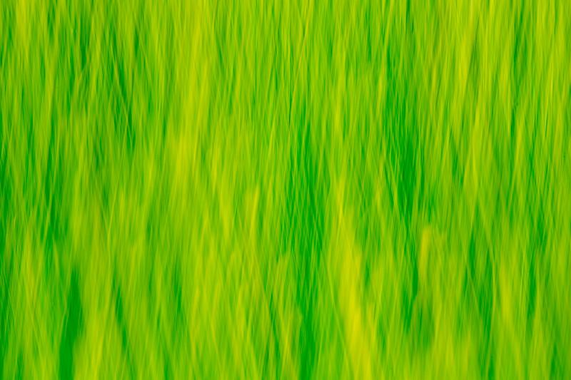 Grass impressions 3