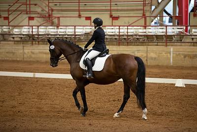 Horse 451