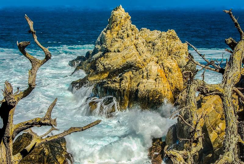 Point Lobos-1.jpg