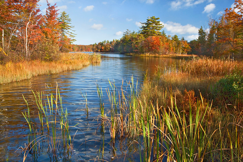 Michigan fall scene
