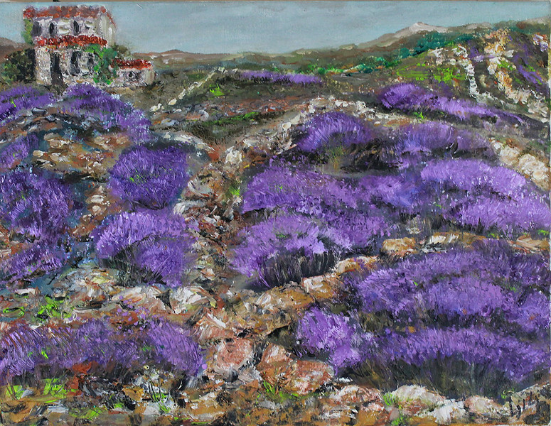 Lavender Landscape on Island of Hvar